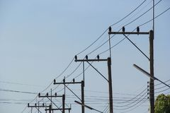 Electricity poles with power line cables stock photography