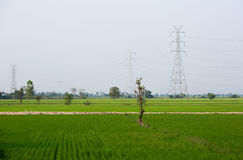 Electricity poles in rice field. In Thailand Royalty Free Stock Photos