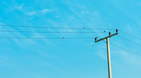 Electricity Post In Blue Sky With Bird On Cable Stock Images