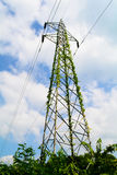 Electricity post with Plants Stock Image