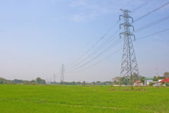 Electricity post and rice field Royalty Free Stock Photo