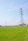 Electricity post and rice field Stock Photography