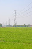 Electricity post and rice field. Electricity post on rice field Royalty Free Stock Photo