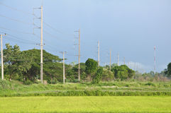 Electricity post with rice field Royalty Free Stock Images