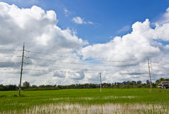 Electricity Posts. High Voltage Electricity Poles in the Rice Field Royalty Free Stock Images