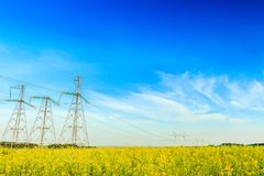 Electricity powerlines in rapeseed field Royalty Free Stock Photo