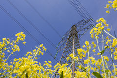Electricity pylon in canola field. Royalty Free Stock Image