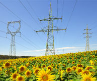 Electricity pylon. In sunflower field stock images