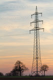 Electricity pylon with trees, Pfalz, Ger Royalty Free Stock Photography