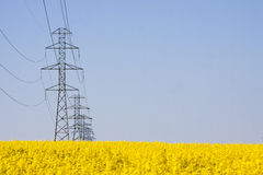 Electricity pylons in a field of rape Royalty Free Stock Photos