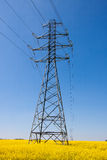 Electricity pylons in a field of rape Royalty Free Stock Photo