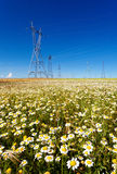 Electricity pylons in a flowers field Royalty Free Stock Image