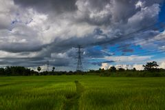 Electricity pylons in the rice field royalty free stock photos