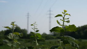 Electricity Pylons. Two electricity pylons in the country during sunny day. Full HD resolution. 200MB/s stock footage