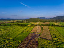 Electricity among Rice Field. Aerial View Royalty Free Stock Photography