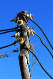Electricity trunk post. Wire on electricity trunk post stock photo