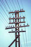 Electricity wires Stock Image