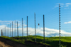Electrified Fence Security Royalty Free Stock Photography