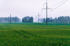 Electro transmission line. Large power lines with air ducts visible through the forest during fog; green cereal fields are in the foreground; electro stock photography