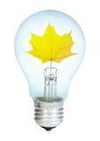 Electrobulb with maple  leaf Stock Image