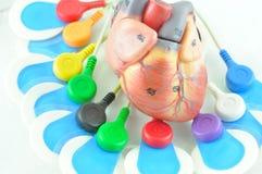 Electrocardiogram Stock Photography