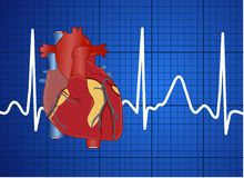 Electrocardiograma Fotografia de Stock