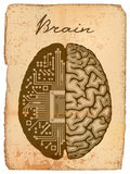 Electronic brain. Royalty Free Stock Photo