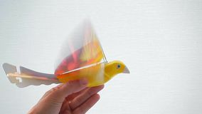 Electronic parrot bird hand white background