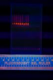Electrophoregram of DNA separation. Nuclear and mitochondrial DNA separated by electrophoresis on an agarose gel. Detection by addition of Ethidium Bromide Stock Photo