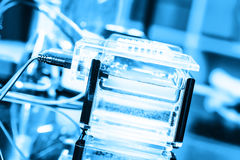 Electrophoresis chamber. Build a gel electrophoresis chamber Stock Image