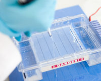 Electrophoresis. Loading a sample into a gel for electrophoresis Royalty Free Stock Photography