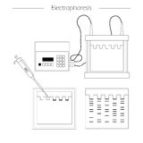 Electrophoresis outline icon Stock Photo