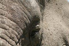 Elefantögonfrans Royaltyfri Foto