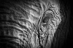 Elefantögonnärbild med detaljen i en konstnärlig omvandling royaltyfri bild