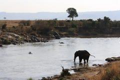Elefantüberfahrtfluß Stockbild