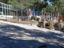 Elefant在徒步旅行队公园 库存图片