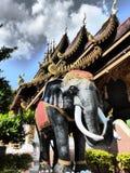 Elefant σε Chiang Mai/Ταϊλάνδη Στοκ Φωτογραφία