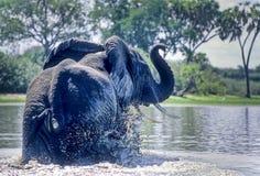 Elefant royaltyfri foto