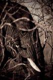 Elefant lizenzfreies stockbild