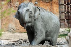 Elefant Royalty Free Stock Photos