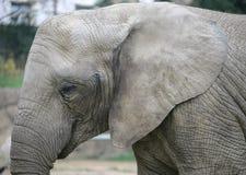 Elefant 19 Lizenzfreie Stockbilder