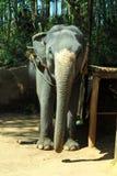 Elefant Στοκ φωτογραφίες με δικαίωμα ελεύθερης χρήσης