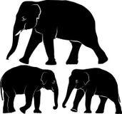 Elefant Lizenzfreies Stockfoto