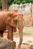 Elefant Stockfotos