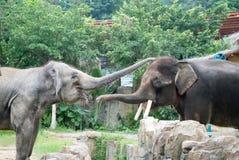 Elefant Stockbild