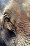 Elefant Lizenzfreie Stockfotografie