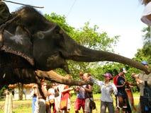 Elefant Stockfoto