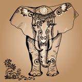 Elefant Arkivbilder