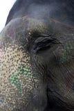 Elefant Στοκ φωτογραφία με δικαίωμα ελεύθερης χρήσης