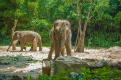 Elefant royaltyfria foton